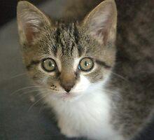 kitten by scott staley