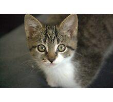 kitten Photographic Print