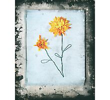 bloomin' marvelous Photographic Print