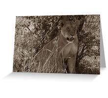 Masai Mara Lioness Greeting Card