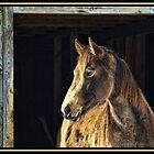 Portrait of my horse by Shonda Hogan