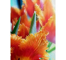 Flames of Spring Photographic Print