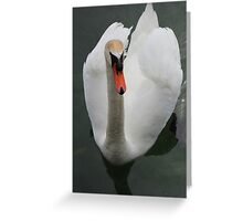 Swan Swimming, White & Graceful - Schwäne Photography Greeting Card