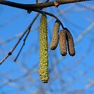 Spring Signs by ienemien