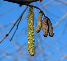 Spring Signs by ienemien