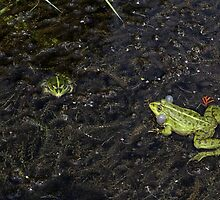 Frog Call - Courting Frog - Frogs in pond Photography by deanworld