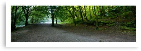 Plymbridge Woods Panoramic by DonDavisUK