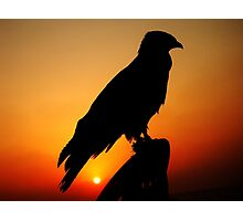 A FALCON WITH THE SUNSET Photographic Print