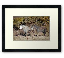 ponies Framed Print