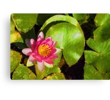 Pretty in Pink - a Waterlily Impression Canvas Print
