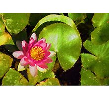 Pretty in Pink - a Waterlily Impression Photographic Print