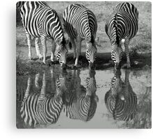 Drinking silhouetted zebras Canvas Print