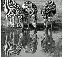 Drinking silhouetted zebras Photographic Print