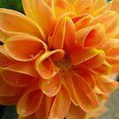 Orange Sorbet with Sprinkles by Tracy Wazny