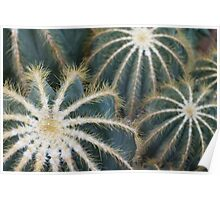 Sharp Beauty - Elegantly Ordered Cactus Needles Poster