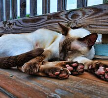 A Siamese Nap by Brandon Jones