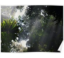 Forest Dreaming - Dorigo NSW Poster