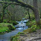 Tangles of Burrator Woods: Dartmor, Devon, UK. by DonDavisUK