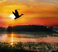 Sunset on the Mississippi Flyway by Nadya Johnson