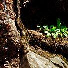 nature's garden by Phillip M. Burrow