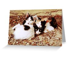 Three Kitties Greeting Card