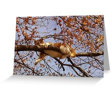 Cat on a tree Greeting Card