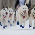 #2 Ceremonial Iditarod Start ~ The Athletes  by Rick &amp; Deb Larson