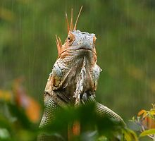 mohican in the rain by gruntpig