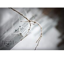 A White Wonder - snow/branch close-up Photographic Print