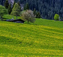 Alpine Meadow by Nick Jenkins