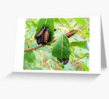 PRUNING OUR SPECIALTY Greeting Card