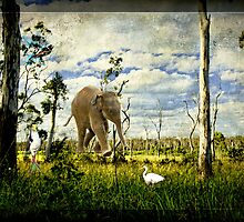 Baby Elephant Walk by SandyA