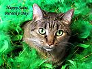 Cat St. Patrick by Veronica Schultz