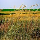 Tall Grasses by Dana Roper