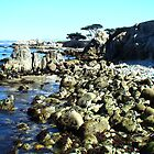 Ocean Splendor by Gail Jones