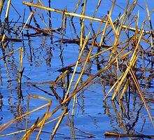 Water Grass Designs by Lynda Lehmann