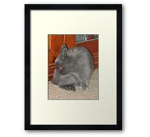 Mad Red-Eyed Rabbit Framed Print