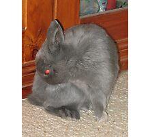 Mad Red-Eyed Rabbit Photographic Print