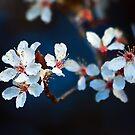 Flowers by Anne McKinnell