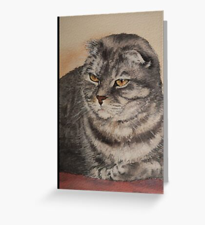 'Bundy' the Scottish Fold Greeting Card