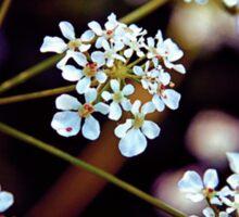 Grow like Wildflowers Sticker