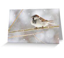 Snowy Sparrow Greeting Card