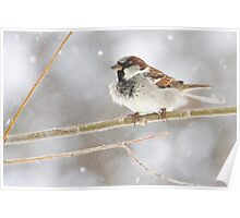 Snowy Sparrow Poster