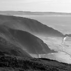 Tomales Point by Forrest L Smith
