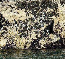 Seabird Rock by Nick Jenkins
