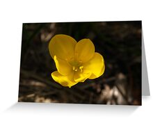 1st Crocus #2 Greeting Card
