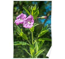 The Great Willowherb Poster