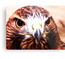 Andi- The Golden Eagle Metal Print