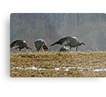 Turkeys Feeding Metal Print