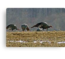 Turkeys Feeding Canvas Print